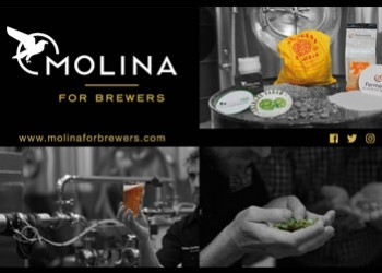 Porquê a Molina for Brewers?
